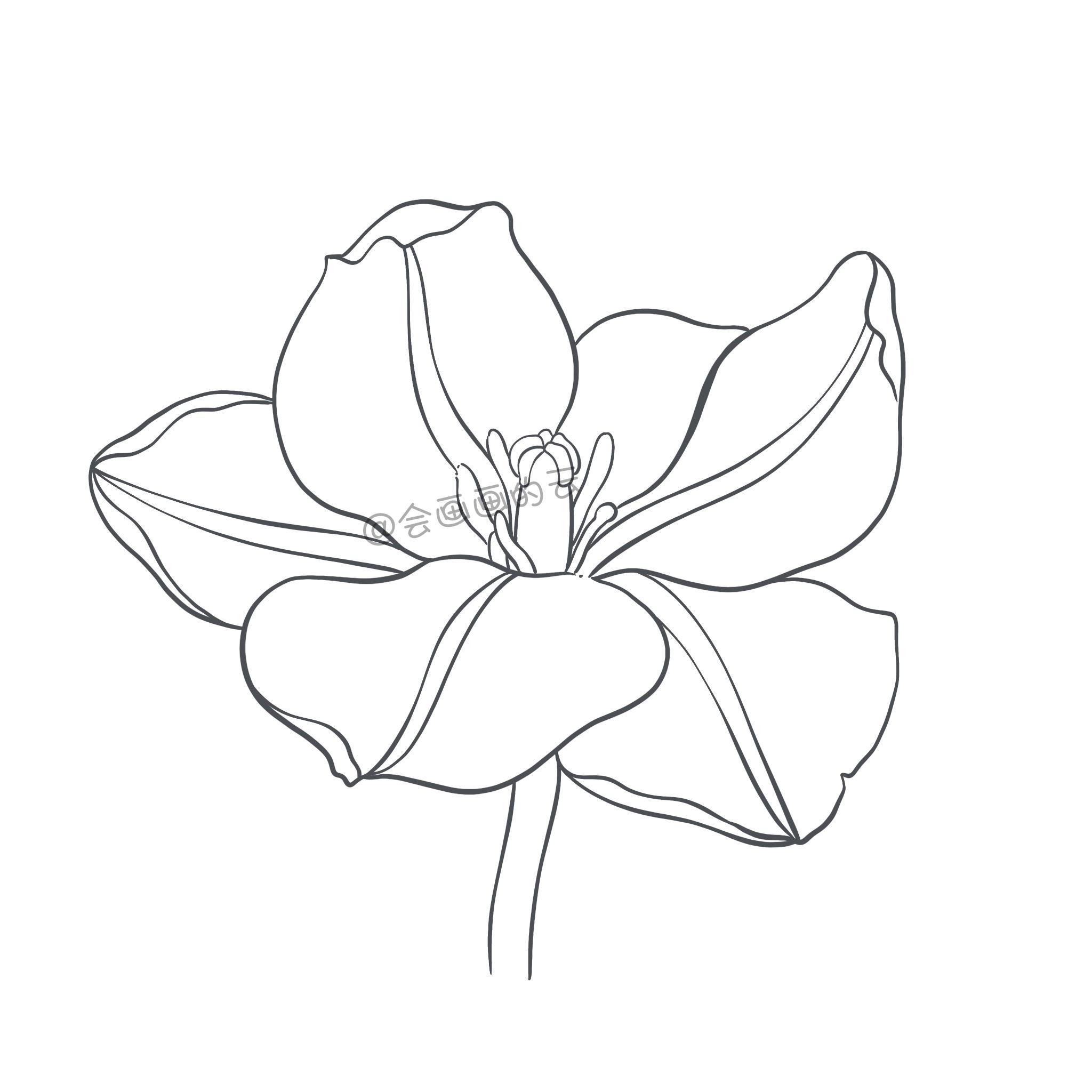 手把手教你画简笔画,干货满满,3款花卉任你选